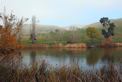 define your own pond