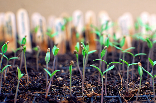 image of plants sprouting